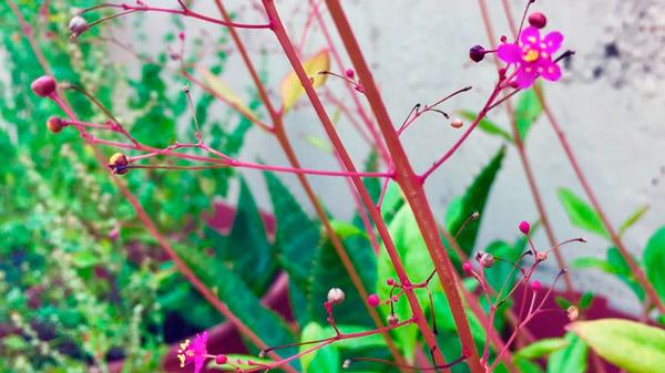 Beneficios De Las Plantas Silvestres Comestibles