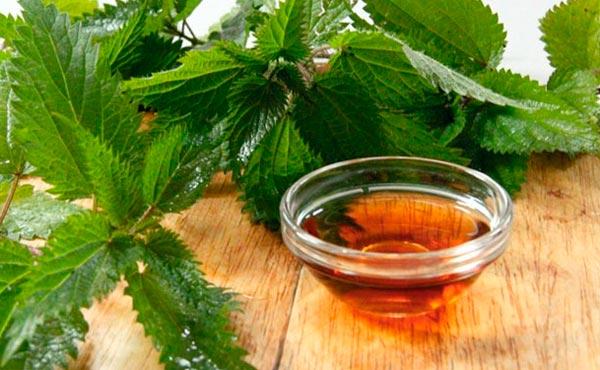 Ortiga, una planta que combate los problemas crónicos de los ...