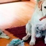 asegurar hogar por las mascotas