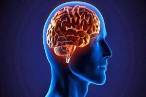 Función principal de la corteza cerebral